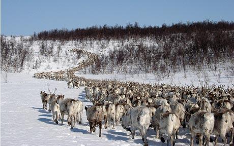 reindeer-turleder_1537142a